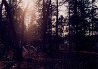 林の中の自転車 20021001178| 写真素材・ストックフォト・画像・イラスト素材|アマナイメージズ
