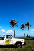 椰子の木とトラック 20021001253A| 写真素材・ストックフォト・画像・イラスト素材|アマナイメージズ