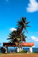 海辺のベンチと椰子の木