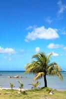 小さな椰子の木