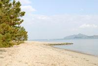 松の木と砂浜