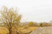 鷺と木 20021001366| 写真素材・ストックフォト・画像・イラスト素材|アマナイメージズ