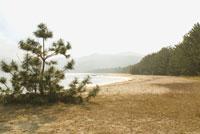 松の木と浜辺 20021001368| 写真素材・ストックフォト・画像・イラスト素材|アマナイメージズ