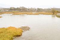 橋から眺める桂川 20021001369| 写真素材・ストックフォト・画像・イラスト素材|アマナイメージズ