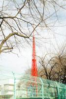 赤い鉄塔と枯木