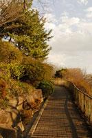 道と木々 20021001383A| 写真素材・ストックフォト・画像・イラスト素材|アマナイメージズ
