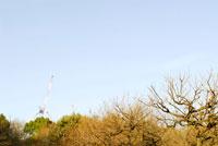 木々とクレーンと青空 20021001387| 写真素材・ストックフォト・画像・イラスト素材|アマナイメージズ