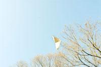 木にひっかかった凧と空 20021001393| 写真素材・ストックフォト・画像・イラスト素材|アマナイメージズ