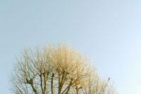 鳩がとまる木と空 20021001396| 写真素材・ストックフォト・画像・イラスト素材|アマナイメージズ