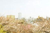 桜と都心の街並み