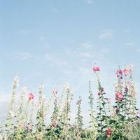 赤い花と空 20021002730| 写真素材・ストックフォト・画像・イラスト素材|アマナイメージズ