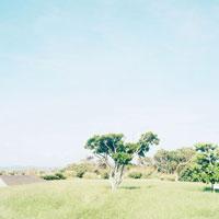 荒崎公園の木 20021003063| 写真素材・ストックフォト・画像・イラスト素材|アマナイメージズ