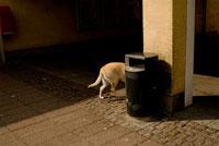 柱に隠れる犬