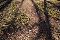 冬の地面に光と影