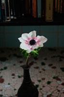 花瓶の花 20021003743  写真素材・ストックフォト・画像・イラスト素材 アマナイメージズ