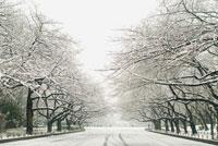 雪の日の公園 20021003790| 写真素材・ストックフォト・画像・イラスト素材|アマナイメージズ