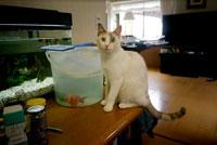 水槽の前の猫