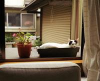 植木鉢に入る猫