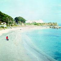人と犬が歩く浜辺