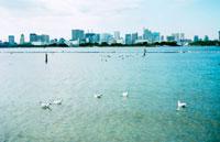 お台場海浜公園のカモメとビル群