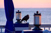 ランプと鳥