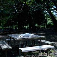 公園のテーブルで眠る猫