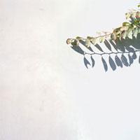 白い壁と葉と影 20021004978| 写真素材・ストックフォト・画像・イラスト素材|アマナイメージズ