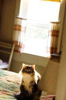 ベットの上に座る猫