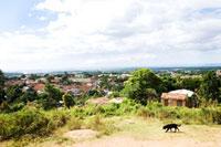 丘から見る街並みと犬