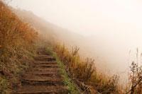 ススキの山道