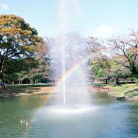 池の噴水と虹