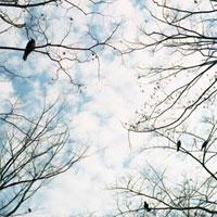 木の枝に止まるカラスと空