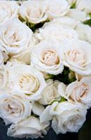 白いバラの花束 20021005515| 写真素材・ストックフォト・画像・イラスト素材|アマナイメージズ