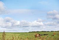 家畜と草原