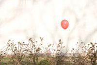 植物にひっかかる赤い風船