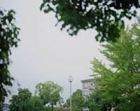 雨の公園と電灯