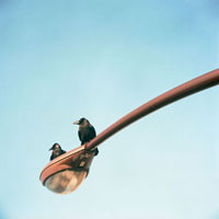 街灯の上の二匹のカラス 20021005685| 写真素材・ストックフォト・画像・イラスト素材|アマナイメージズ