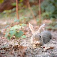 座るウサギ 20021005697| 写真素材・ストックフォト・画像・イラスト素材|アマナイメージズ