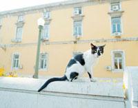 塀に登った猫と住宅 20021005721| 写真素材・ストックフォト・画像・イラスト素材|アマナイメージズ