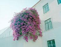 住宅と花 20021005722| 写真素材・ストックフォト・画像・イラスト素材|アマナイメージズ