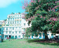 花の咲いた木と住宅 20021005723| 写真素材・ストックフォト・画像・イラスト素材|アマナイメージズ