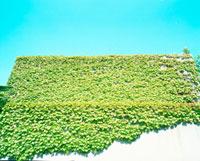 ツタの生えた建物 20021005730| 写真素材・ストックフォト・画像・イラスト素材|アマナイメージズ