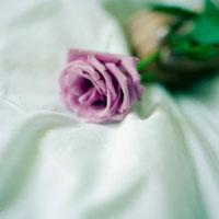 バラとシーツ 20021005771| 写真素材・ストックフォト・画像・イラスト素材|アマナイメージズ