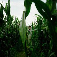 夕暮れのとうきび畑と女性 20021005778| 写真素材・ストックフォト・画像・イラスト素材|アマナイメージズ