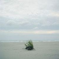 薄曇りの内灘海岸で風に揺れる草 20021005786| 写真素材・ストックフォト・画像・イラスト素材|アマナイメージズ