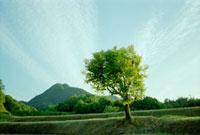 青空と1本の木 20021005815| 写真素材・ストックフォト・画像・イラスト素材|アマナイメージズ