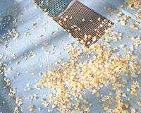 地面に散らばったイチョウの葉 20021005849| 写真素材・ストックフォト・画像・イラスト素材|アマナイメージズ