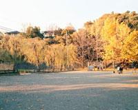 公園とイチョウ 20021005852| 写真素材・ストックフォト・画像・イラスト素材|アマナイメージズ