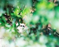 草むらの野良猫 20021005855| 写真素材・ストックフォト・画像・イラスト素材|アマナイメージズ
