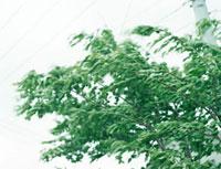 風に揺れる葉っぱ